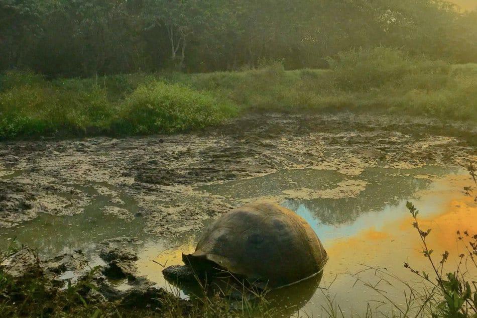 Giant Tortoise reserve, Santa Cruz, Galapagos Islands