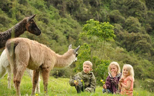 Zuleta for Children - Llamas